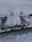 Snow cat on University Park