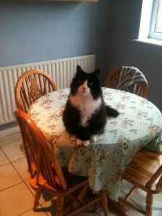 Seb wondering where his dinner is