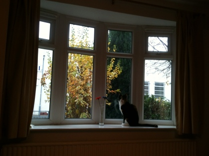 Martha enjoying the late autumn scene from our lounge