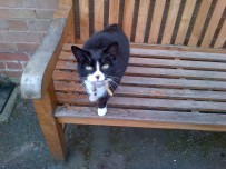 Peter the cat at Whatton in the Vale Jubilee Rooms