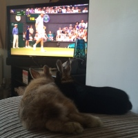 Watching tennis with the bunnies